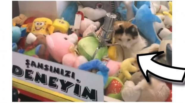 "This Is What Happens When A Cat Goes To Sleep In A ""Claw Machine"""