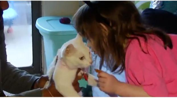 This Blind Girl Was Reunited With Her Beloved Cat, and It's the Sweetest Moment!