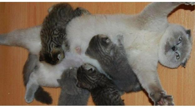 Do Cats NEED To Have at Least One Litter of Kittens?
