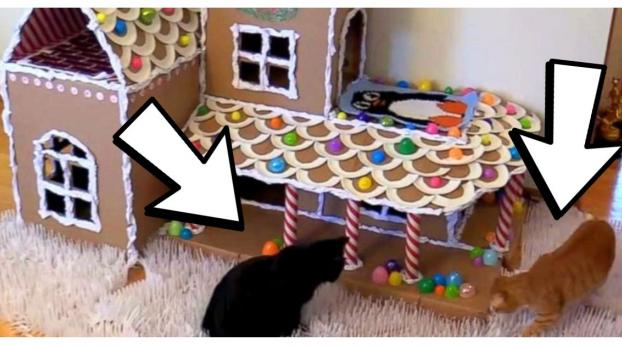 VIDEO: This Is How To Make a Giant Gingerbread House For Your CATS!
