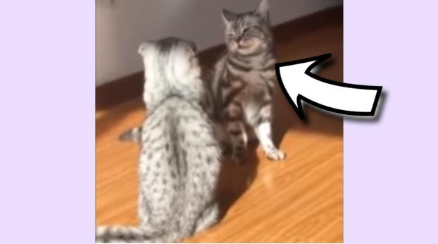 """Cat Pulls Out Hilarious Move In Dramatic """"Cat Fight"""""""