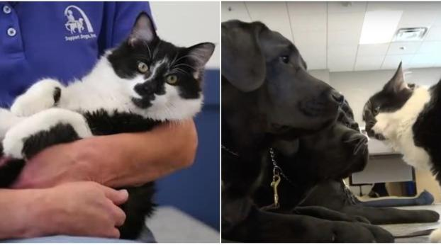 This Amazing Cat Trains Service Dogs (And Believes He's A Dog, Too)