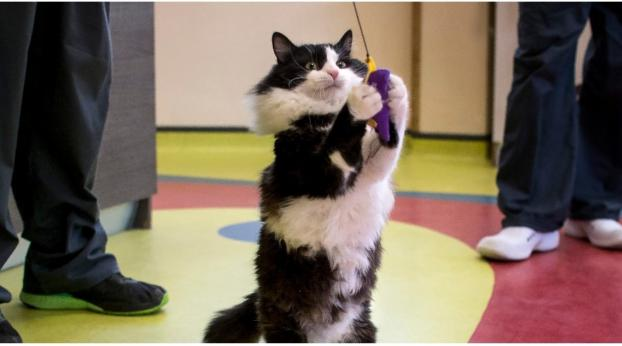 Meet Pooh, the Bionic Cat Who Is Making History in Bulgaria