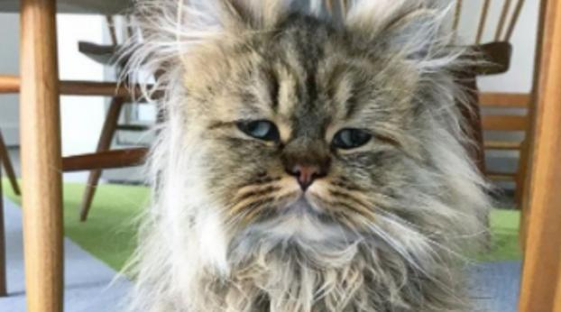 PICTURES: Meet Barnaby, the Fluffiest Cat in the World