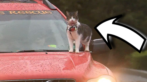 He Was Driving With His Cat on the Hood, When Someone Called the Police