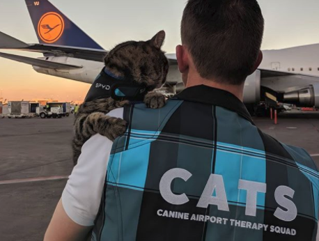 The unlikely mission of this CAT at the AIRPORT