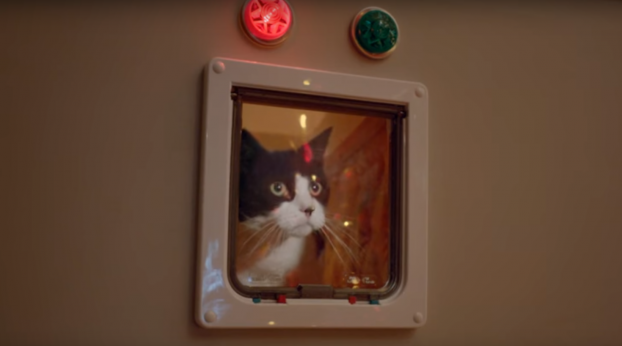 VIDEO: This Experiment Shows How Cats Really Feel About Christmas