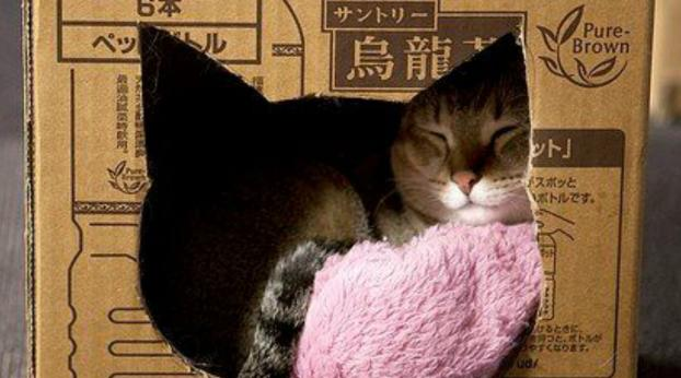 Fun Ideas For Cozy and Adorable Cat Homes You Can Make Yourself