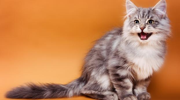 Why Cats Go Crazy For Catnip