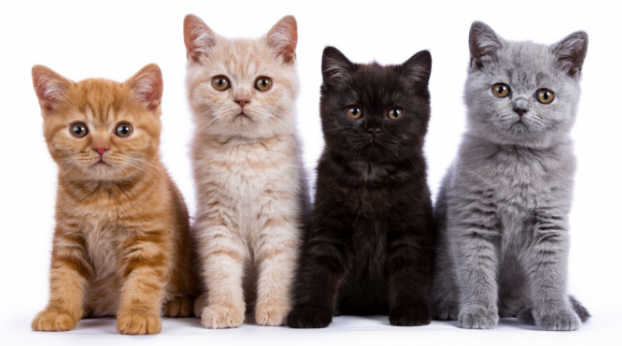 These Are the Names for the Most Common Color Patterns in Cats