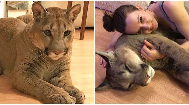 """This Couple Has a Very Unusual """"Cat"""" and Won't Stop Bragging About It on the Internet"""