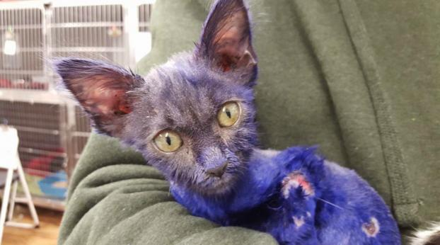 Remember the Kitten Found Covered in Purple Paint? This Is What He Looks Like Today