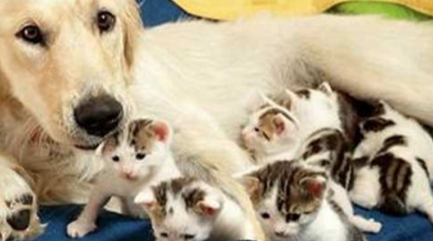 She Lost Her Puppies, and When She Found These Little Kittens She Did the Most Amazing Thing