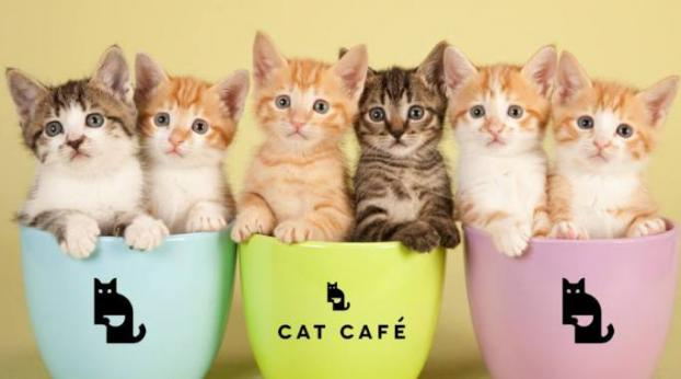 Are Cat Cafes a Good Idea?