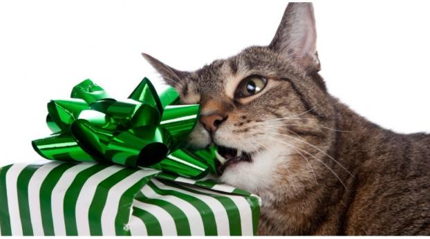 Spoil Your Cat with These Incredible Gifts This Holiday Season