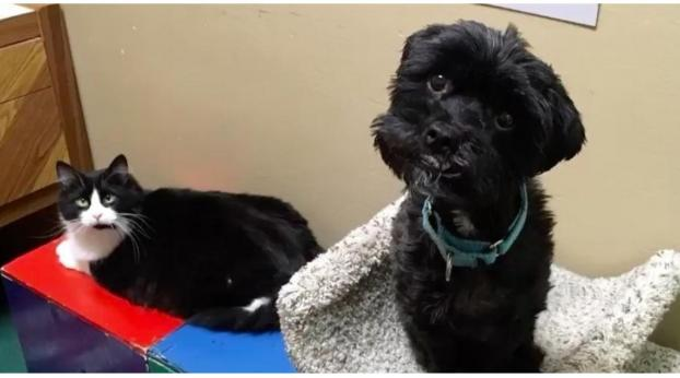 This Cat, Mouse, and Dog Are Best Friends and Refuse to be Adopted Separately!