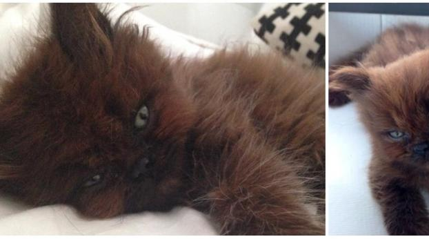 She Adopted a Strange Kitten, and One Year Later the Transformation Is Incredible!