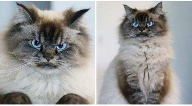 Why Is This New Internet-Famous Feline So Angry?