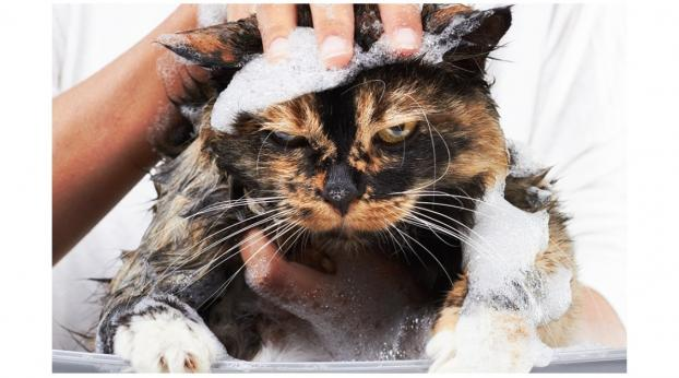 Bathing Your Cat: Is It a Bad Idea or a Necessary Task?