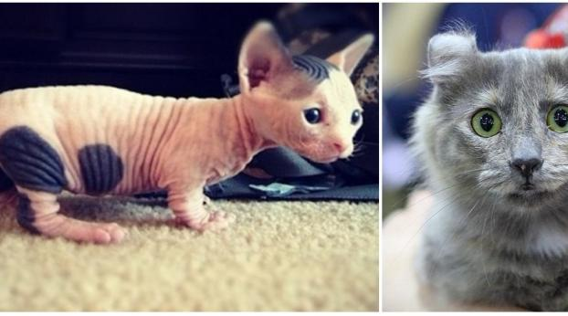 These are the 10 Strangest Cat Breeds in the World