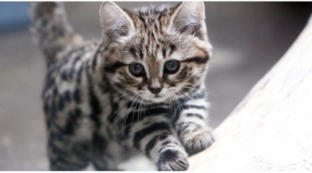 The Deadliest Feline in the World Is Also the Most Adorable