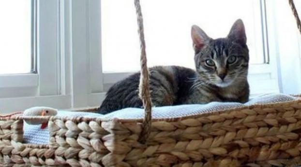This Cat Was Expelled from His Home, but One Human Turned His Life Around