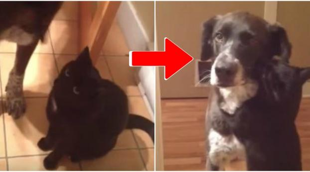 This Cat Can't Hold Back His Emotion When He Sees His Dog Friend Again After 10 Days